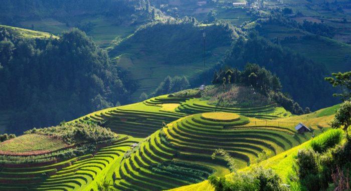Risterasser Vietnam